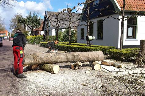 Snoeien bomen Peter Schouten